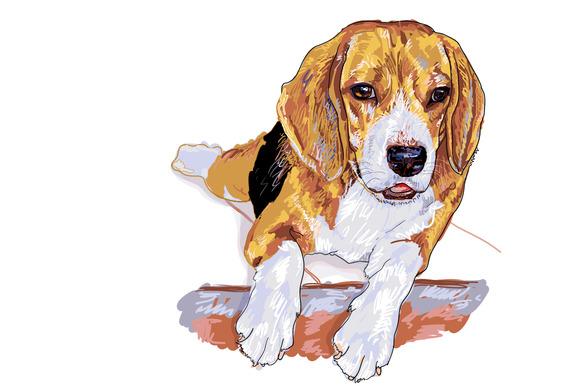 Resting Beagle