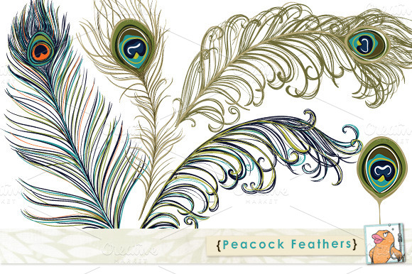 Peacock Feather Clip Art