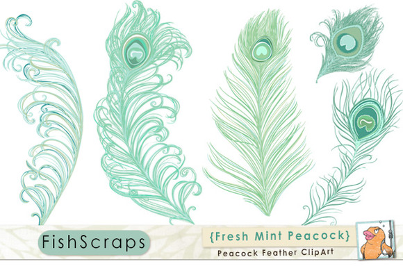 Mint Teal Peacock Feathers Fresh