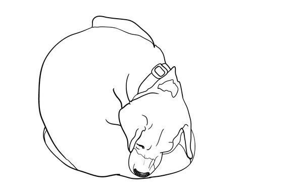 Itchy Beagle