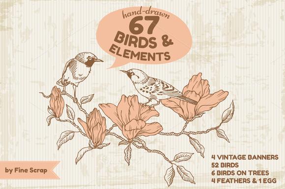 67 Hand-drawn Birds Elements