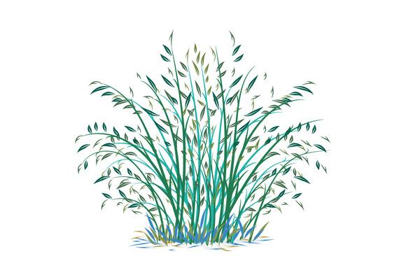 Bush Of Bamboo On White