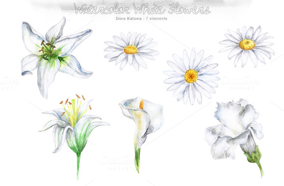 Watercolor White Flower Set