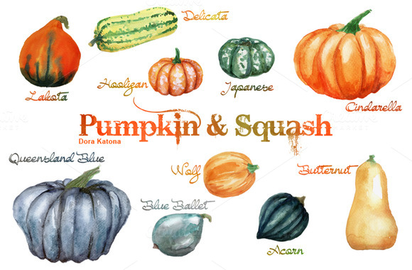 Watercolor Pumpkin And Squash