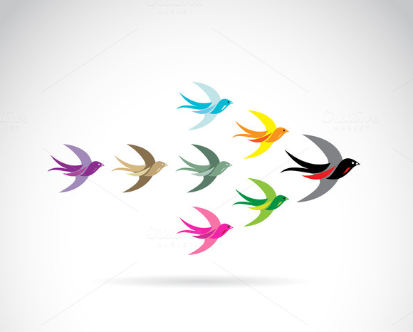 Group Of Colorful Swallow Birds