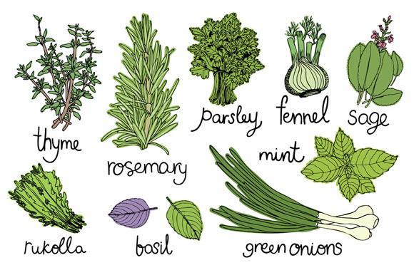Culinary Herbs Set