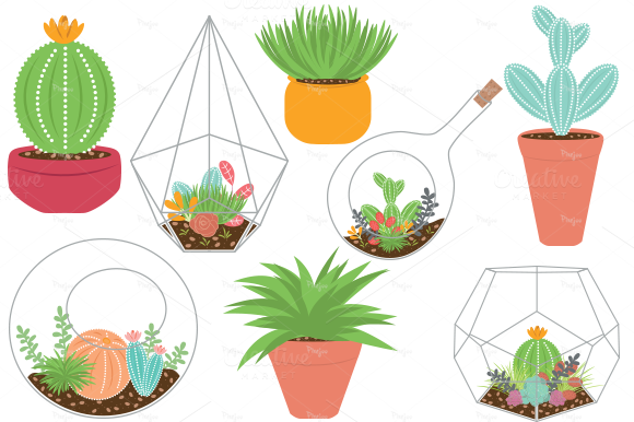 Terrariums And Plants EPS PNG