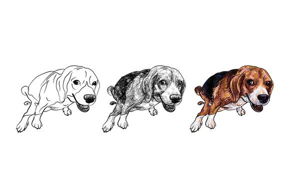 Pooping Beagle