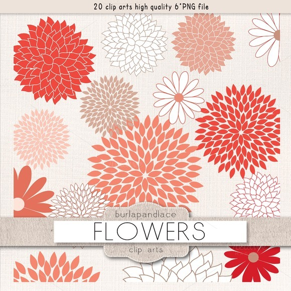 Mum Flower Coral Red Clipart