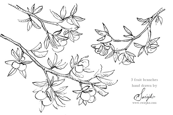 Ink Doodles Branches Fruit Tree