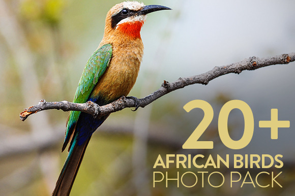 African Birds Photo Pack