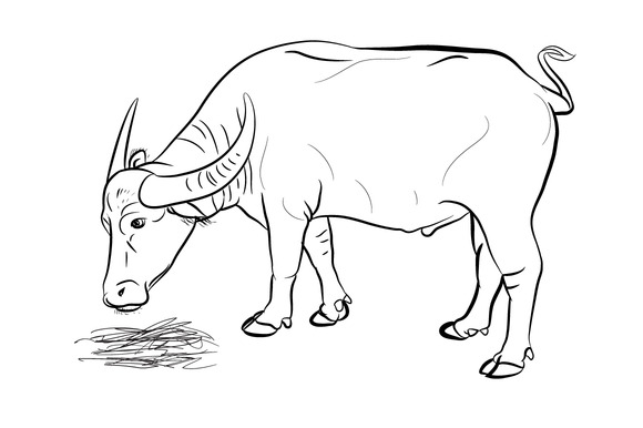 Buffalo Eating Hay-vector