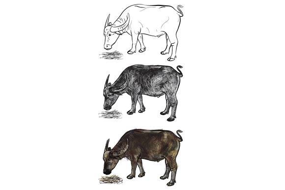 Buffalo Eating Hay-vector