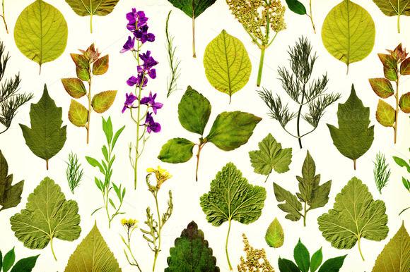 Vintage Herbarium Seamless Pattern