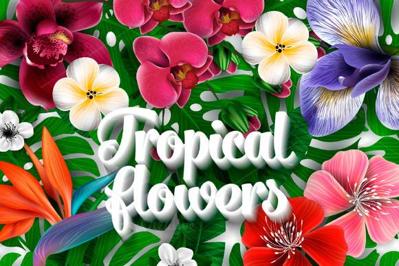 Tropical Flora Vector