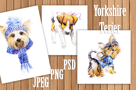Dogs Yorkshire Terrier