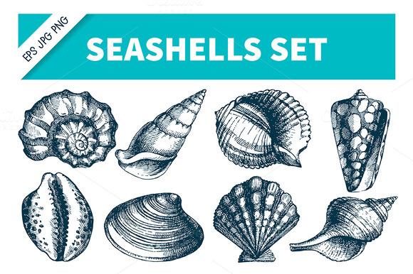 Hand Drawn Sketch Seashells Set