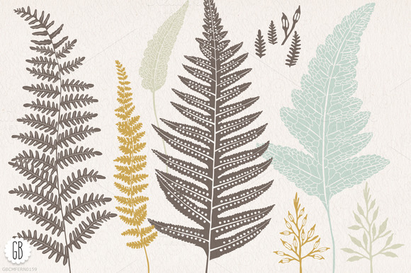 Fern Botanical Vector Graphics