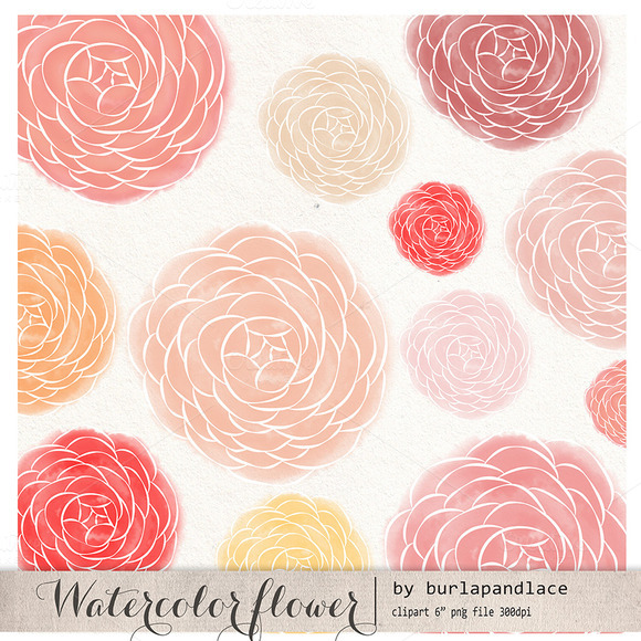 Watercolor Flower Ranunculus