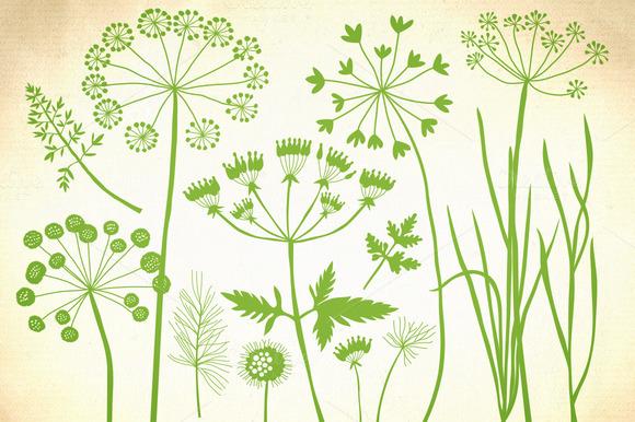 Herbs Dandelion Wild Grasses