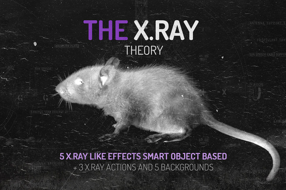 The X.RAY Theory