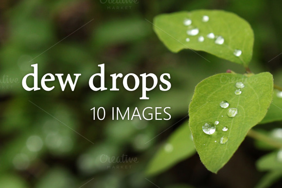 Dew Drops Photo Pack