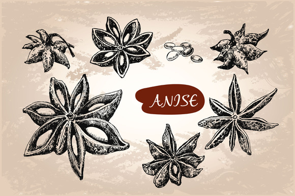 Anise Set Of Vector Illustrations