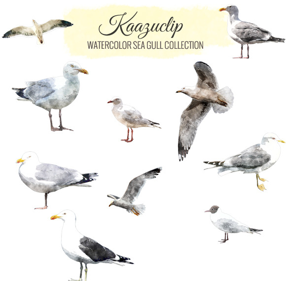 Watercolor Sea Gull Collection