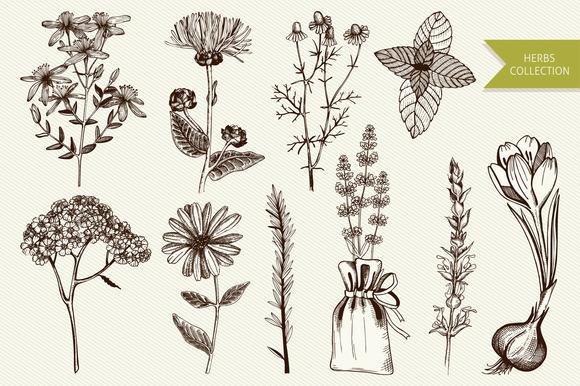 Ink Hand Drawn Herbs Illustration