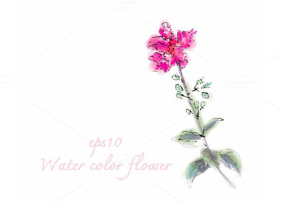 Water Color Flower On White Backgrou