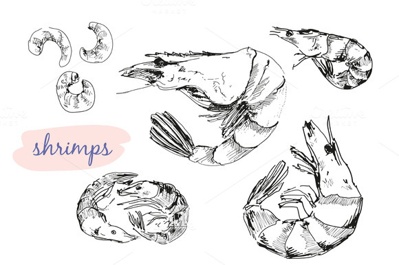 Shrimps Vector Illustrations