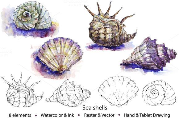 Watercolor Vector Sea Shells