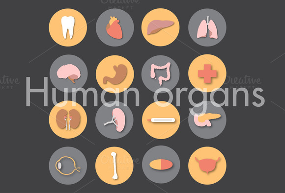 Human Organs Icons Medicine