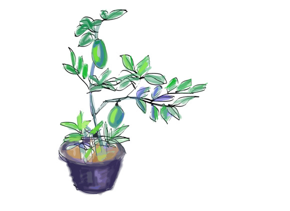 Sketch Vector Of Lemon Tree