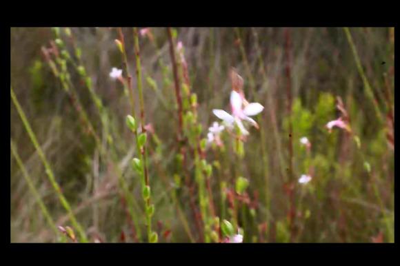 Flower Video