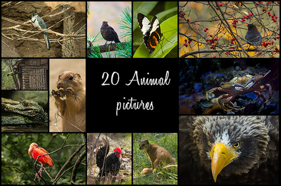 20 Animal Pictures