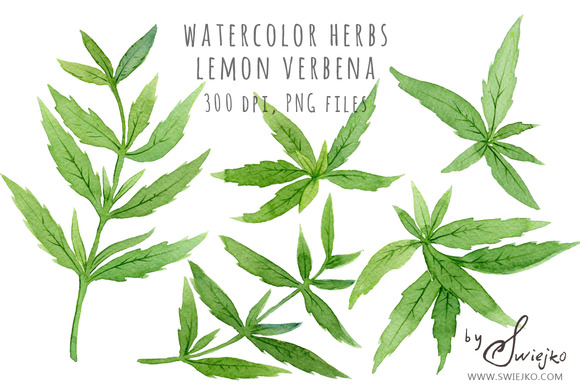 Watercolor Herbs Watercolor Clipart