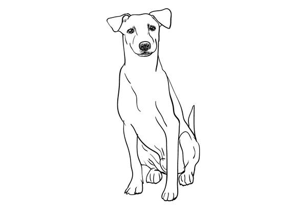 Sitting Brown Dog