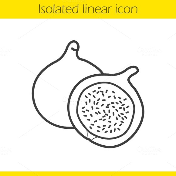 Fig Linear Icon Vector