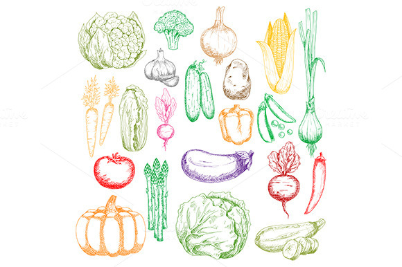 Colored Sketched Farm Vegetables