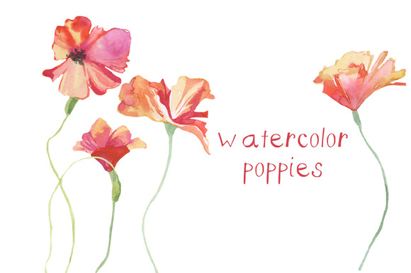 Watercolor Poppies Illustration
