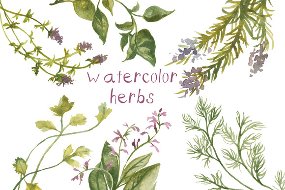 Watercolor Herbs Illustration