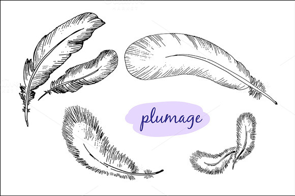 Plumage Hand Drawn Graphic