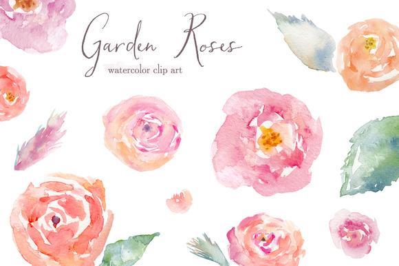 Garden Roses Watercolor Clip Art