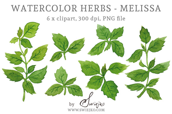 Watercolour Herbs Melissa