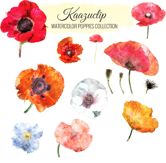 Watercolor Poppies Collection