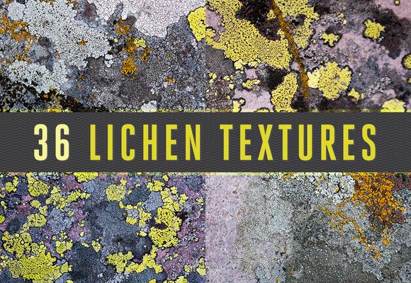 36 Lichen Textures