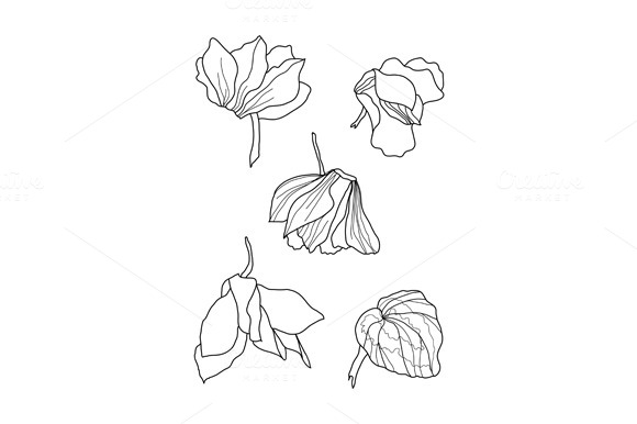 Cyclamens Pen Drawing Set