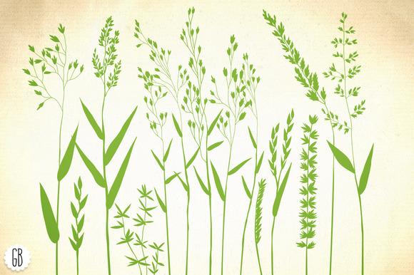 Wild Herbs Hair Grass Wheat