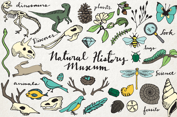 Natural History Illustration Pack